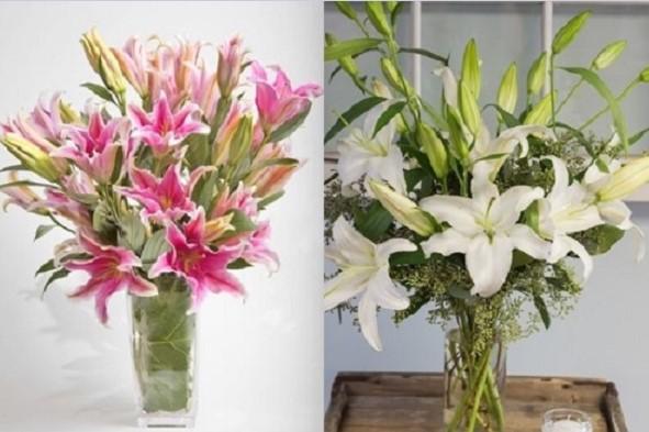 Hướng dẫn cách cắm hoa ly ngày Tết