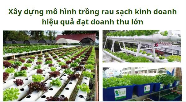 Xây dựng mô hình trồng rau sạch kinh doanh hiệu quả đạt doanh thu lớn