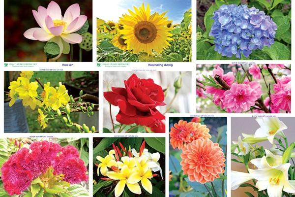 Tổng hợp ý nghĩa thú vị của các loài hoa mà không phải ai cũng biết