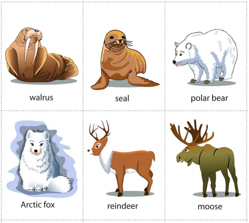 Phương pháp học từ vựng về động vật cực thông minh