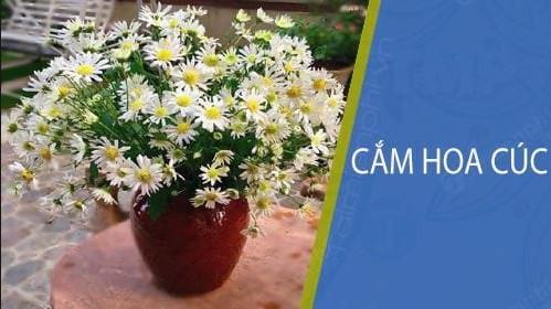 Gợi ý 5 cách cắm hoa cúc đẹp cho không gian phòng khách thêm rực rỡ