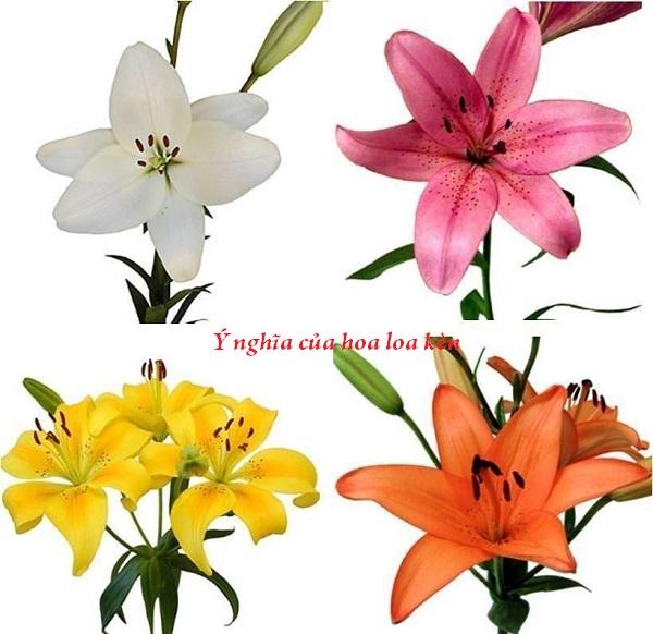 Khám phá ý nghĩa ít biết của loài hoa loa kèn tuyệt đẹp