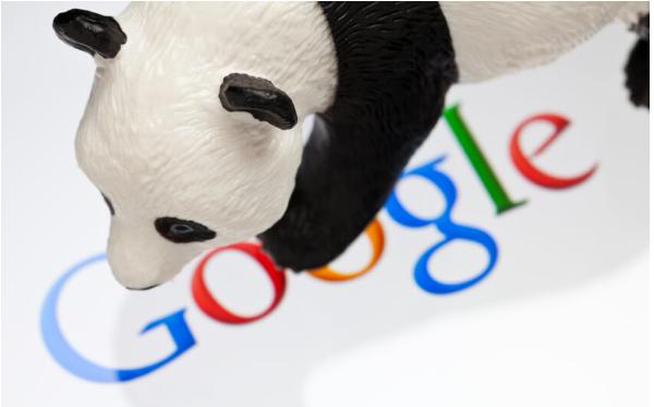 Những điều Seoer nên biết về google panda?
