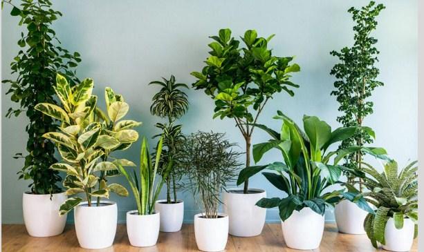 Top 5 loại cây trồng trong phòng ngủ cực tốt giúp tăng tuổi thọ con người