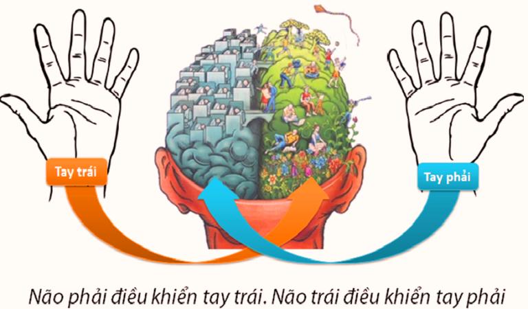 Đột phá tư duy với bí quyết sử dụng cân bằng 2 bán cầu não