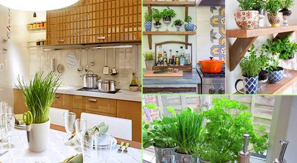 Bật mí cách trồng cây phong thủy trong nhà giúp lọc khí, hút tài lộc tốt nhất
