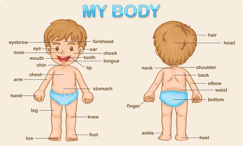 Cùng con vừa chơi vừa học từ vựng tiếng Anh về bộ phận cơ thể người