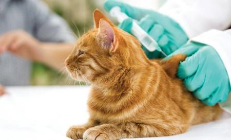 Hướng dẫn quy trình chăm sóc thú cưng 3 tháng đầu đời